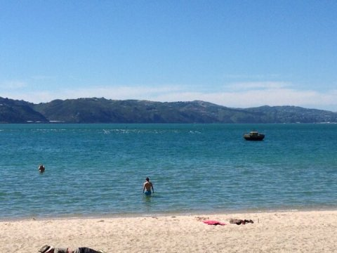 Dolphins as seen from Oriental Bay. Photo by Steven Wong aka @winesentience.